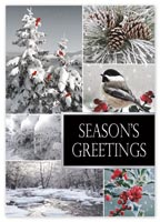 Winterland Holiday Cards